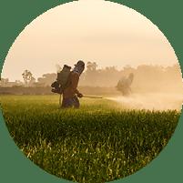 Herbicidas e Variedades